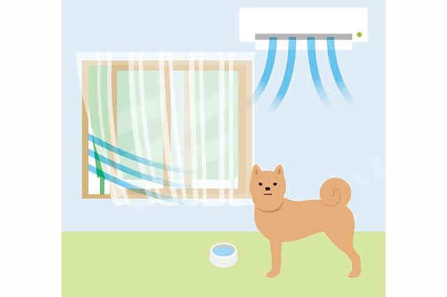 室内にいる犬